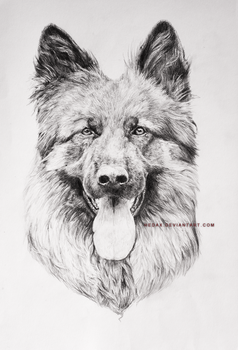 Shep pencils by Hedax