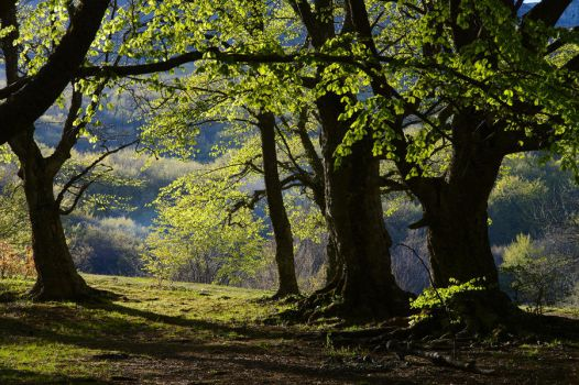 sunny grove by StanOd