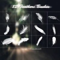 +12 Feathers Brushes. by natieditions00