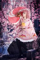 Cherry Blossoms in the Wind - Noragami by Miss-Fairy-Floss