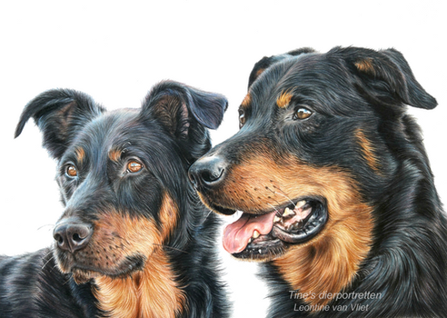 Ziggy and Fleck, colored pencil by LeontinevanVliet