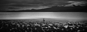 Loner by IvanAndreevich