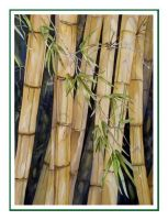 Bamboo No.2 by baglady
