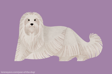 Year of the Dog - Coton de Tulear by Kelgrid