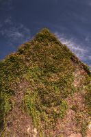 ivy wall hdr stock by marlene-stock