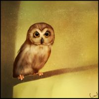 Small owl by GaudiBuendia