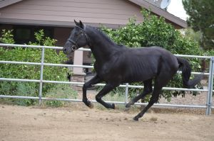 DWP FREE HORSE STOCK 144 by DancesWithPonies