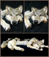 The She-Wolf by WeirdCityTaxidermy