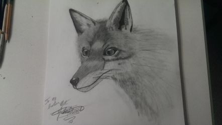 Red fox by MrFalloutDropout