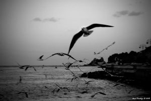 Goin' Where The Wind Blows... by ditya