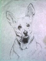 Chihuahua by ryliecat