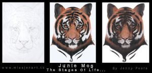 Jungle Mog, The Stages Of Life by JenTheThirdGal