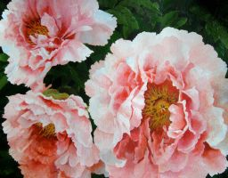 Peonies by Mad-Margaret