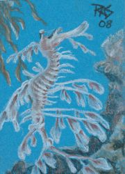 ACEO TW Leafy Sea Dragon by robertsloan2