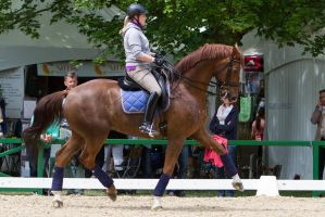 Chestnut Uphill Trot High Tension by LuDa-Stock