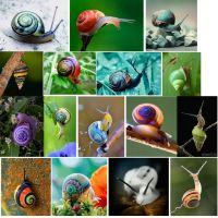 Snail by Oscorix