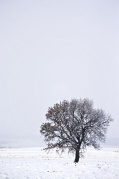 Winter. by Jack070