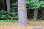 Bread-stapled-to-a-pale-tree by KickyPie