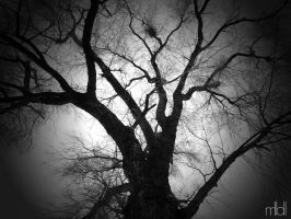The old tree by mll0ll