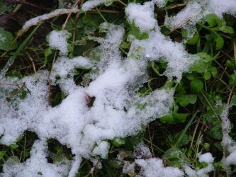 ice on grass by serialkillerstock