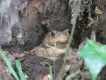 Toad in a tree! by Foziz105