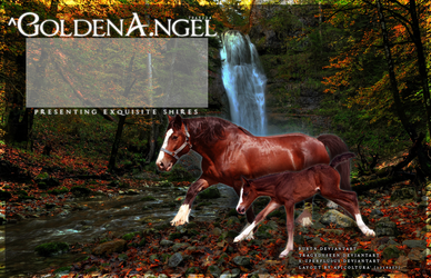 ^GoldenA.ngel Layout Order by kaylasakiller