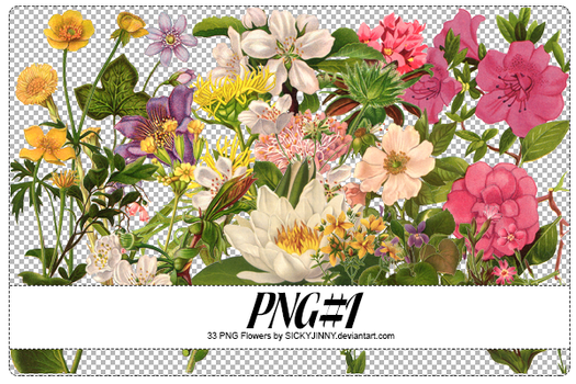 PNG#1. Flowers by SickyJinny