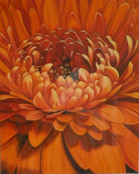 orange flower - competition by tistwas