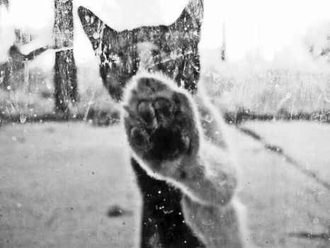 Let me in and out of the cold by Chexee