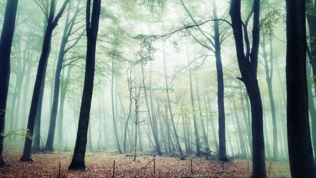 Into the woods by CarlierPhotography