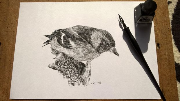 Sparrow by delph-ambi
