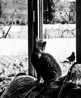 cat and bird and window by cahilus