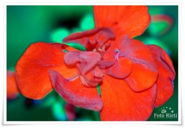 Passion and red flower by passionefoto