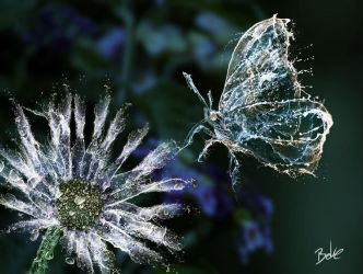 Water Butterfly and Flower by B-O-K-E