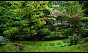Japanese Garden by Prince-Photography