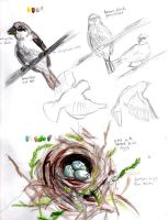 Sparrow and nest field sketch by amybalot