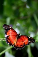 red and shiney by felixrohrbach