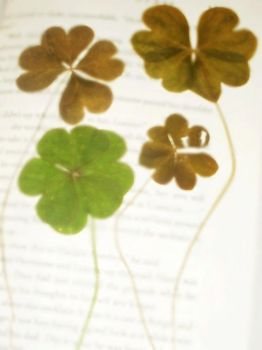 1st 4 4-leaf Clovers by ChevelleRose