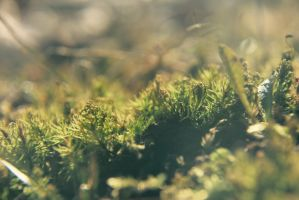 a patch of moss by prettyflour
