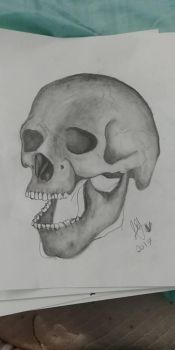 Another Skull by Cheeseburger911
