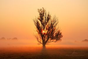 Everyday Miracle by markborbely