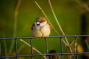 Bird on a Fence by Ddwmjr1985