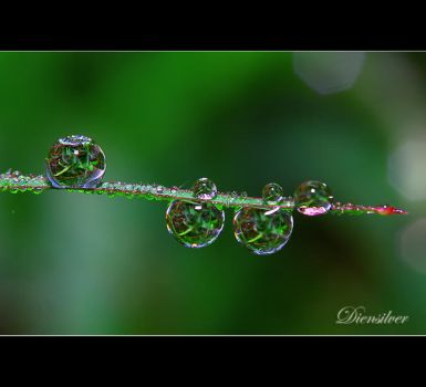 Happnines inside the dews by diensilver