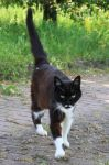 Cat Stock 36 by Malleni-Stock