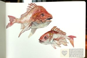 Red Snapper Watercolor by taho