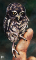 Digital art: Elf owl by Crateris