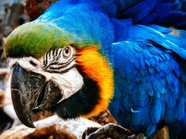 Photogenic Macaw by Tairenar