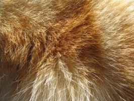 Fur Texture 02. by stock-basicality