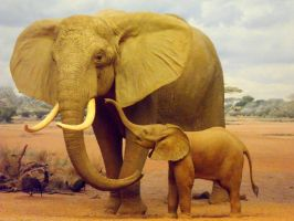 Savannah Elephant Mother and Baby by InkTheEchidna