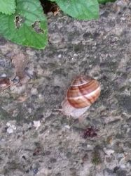 snail_2 by ACE977